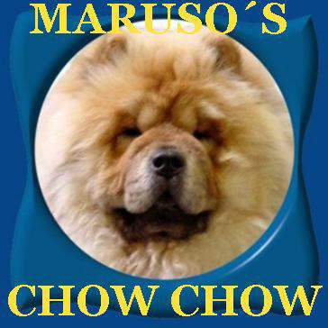 Maruso's Chow-Chow